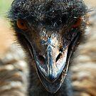 Emu by Glen Johnson