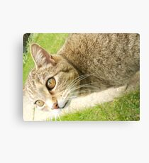 Graceful Kitty Canvas Print