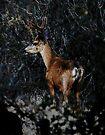 Deer at the Archery Range by Corri Gryting Gutzman