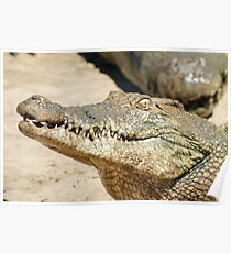 Saltwater Crocodile Crazy 5 Poster