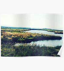 Wetlands in Padilla Poster