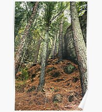 Brown Forest Sri Lanka Poster