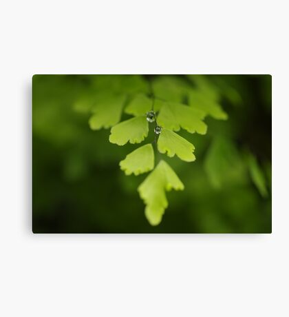Maidenhair Magic Canvas Print