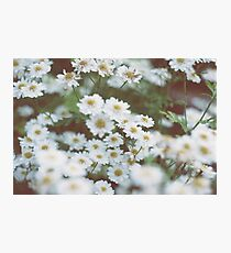 little flowers  Photographic Print