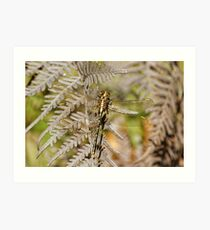 Yellow-striped Hunter (Austrogomphus Guerini) Dragonfly Art Print