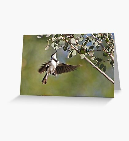Banded Honeyeater ~ Dinner the hard way  Greeting Card