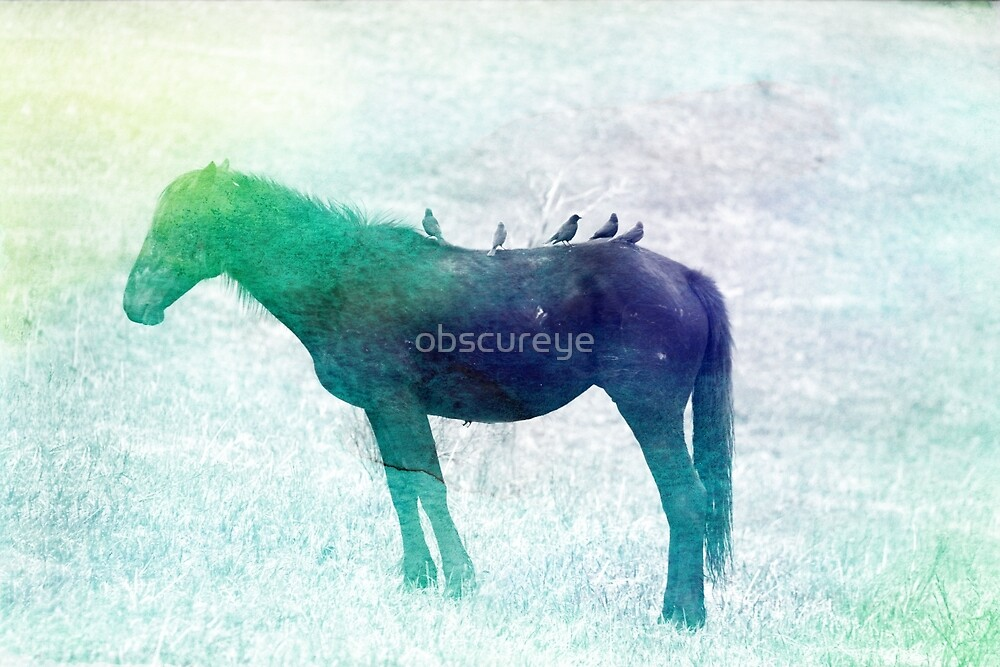 Water Colour Colt by obscureye