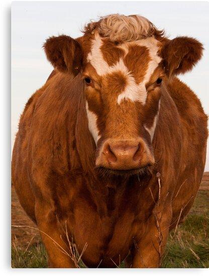 The Cow by Giorgio-F