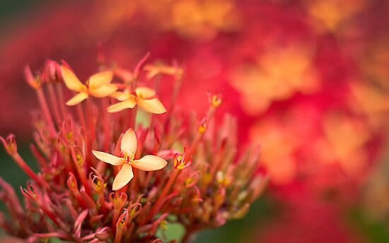 Wild Flowers by Susan Tong