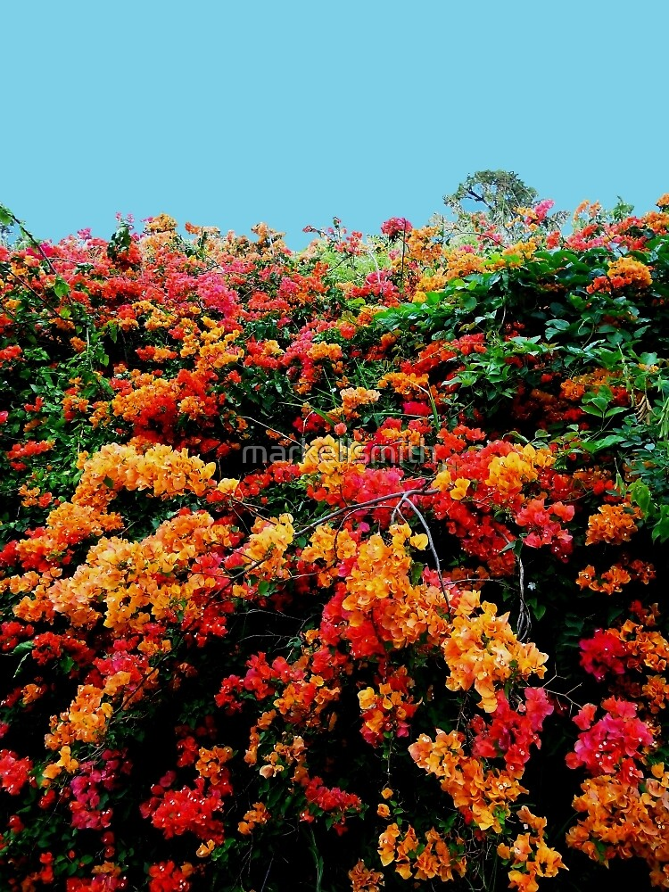 The Kauai Flower by markellsmith