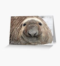 The Beach Master  ~  Southern Bull Elephant Seal Greeting Card