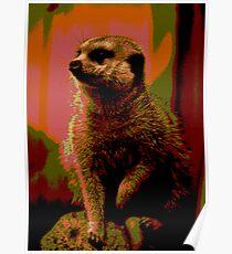 Meerkat print Poster