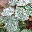 Rain In My Garden by SizzleandZoom
