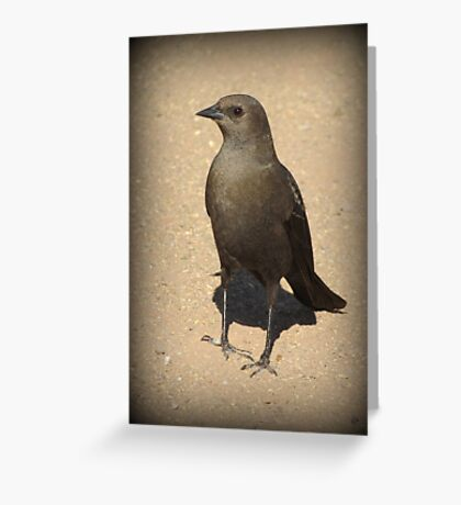 Brewers Blackbird~ Female Greeting Card
