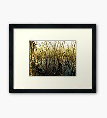 Swamp Lake Framed Print