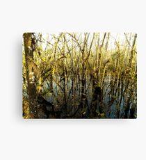 Swamp Lake Canvas Print