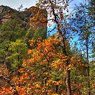 Fall In Sedona Arizona by K D Graves Photography