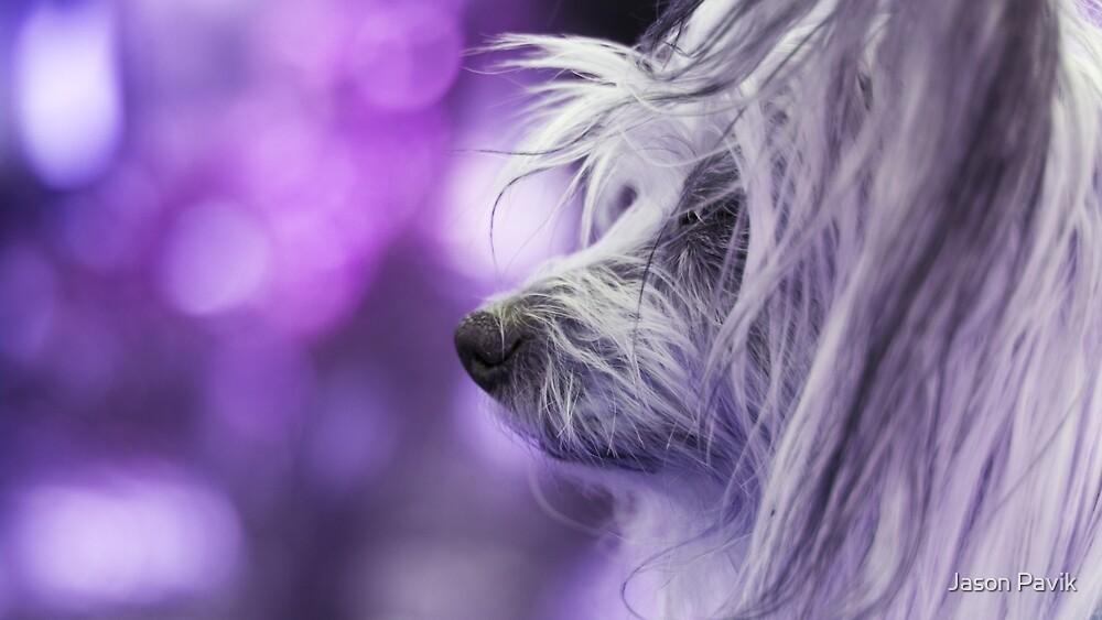 Dog Portrait - Dharma by Jason Pavik