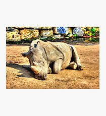Sleeping Rhino - HDR Photographic Print