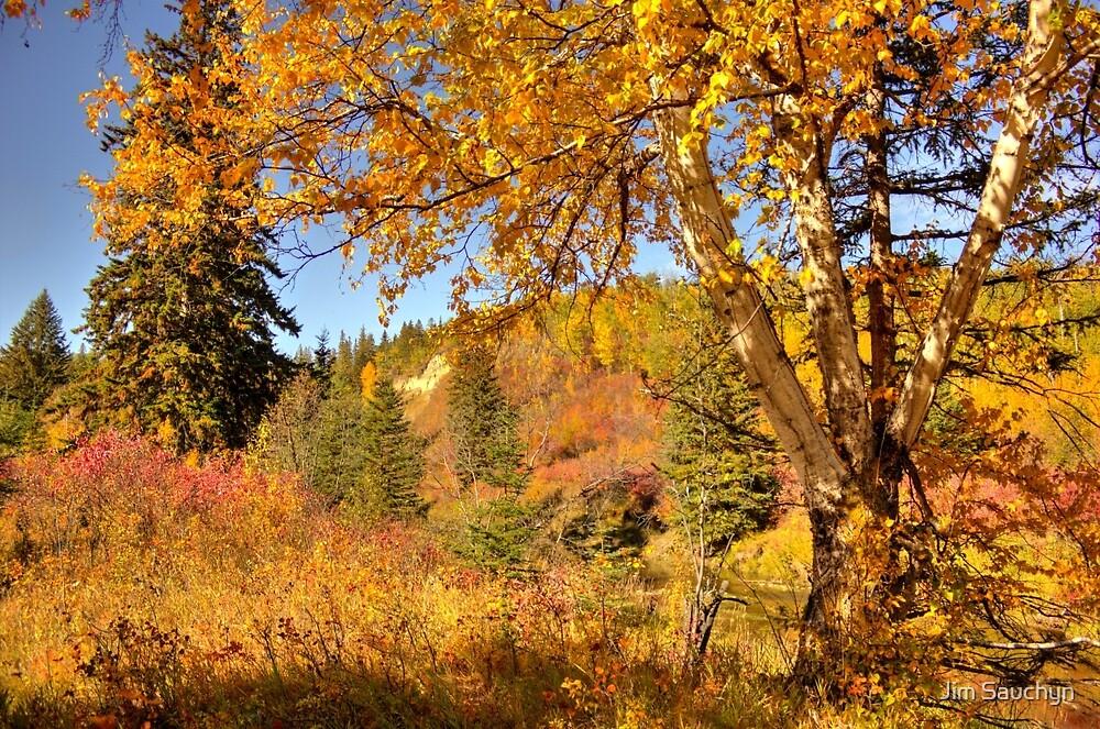 Birch Tree in Autumn by Jim Sauchyn