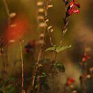 Lon by SylvestreLeChat