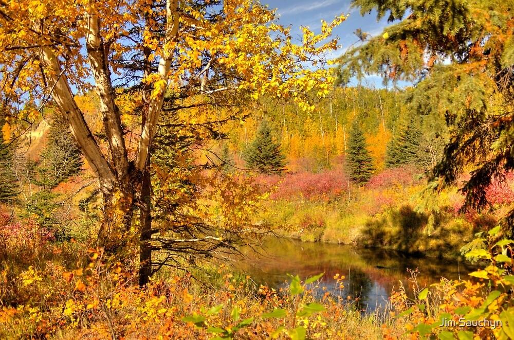 Autumn Birch Tree by Jim Sauchyn