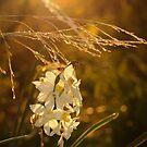 Shine by SylvestreLeChat
