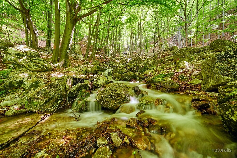 Mountain trail in the forest by naturalis