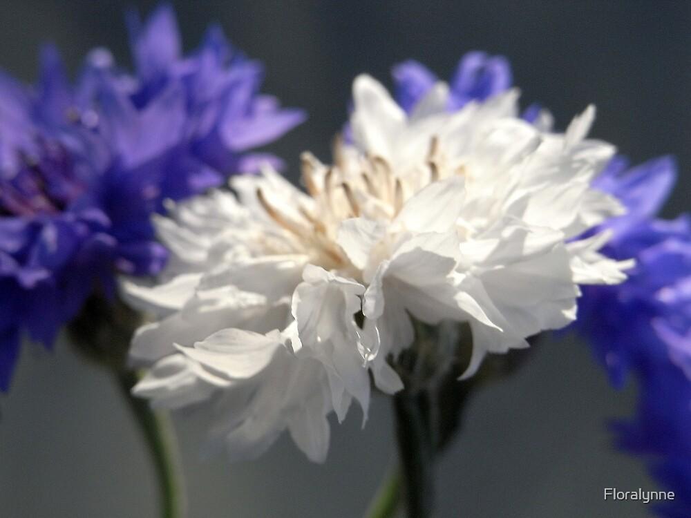 cornflower white by Floralynne