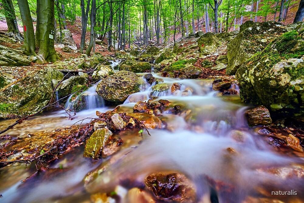 River flowing through rocks by naturalis