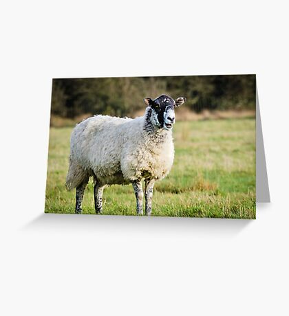 The interrupting Sheep... Greeting Card
