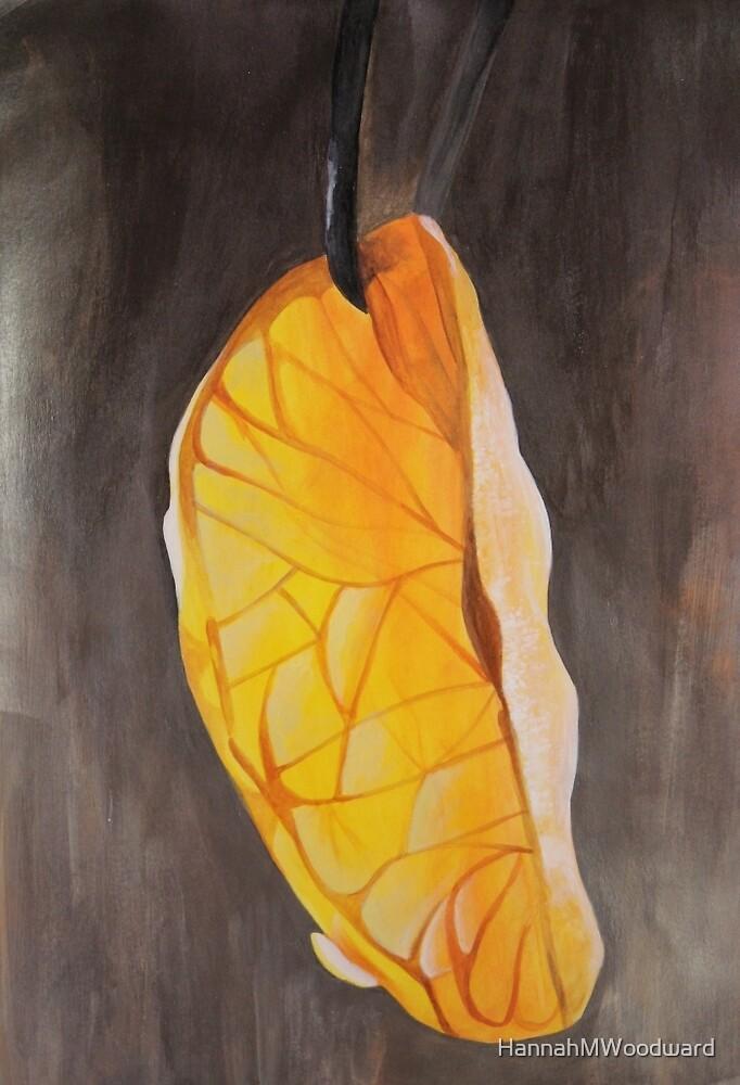 Orange Slice by HannahMWoodward
