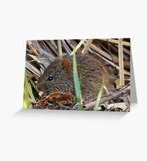 Arizona Cotton Rat Greeting Card