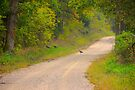 Turkey Crossing by NatureGreeting Cards ©ccwri