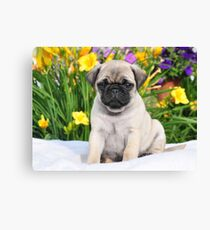 Cute Puppy Caesar the Pug by AiReal Apparel Canvas Print