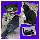 Natural Enemies - Cats and Birds Collage von BlueMoonRose