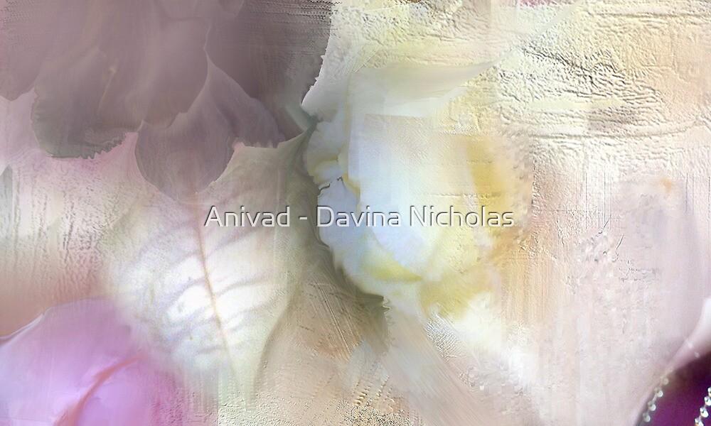 The Artists Rose by Anivad - Davina Nicholas