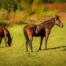 Horses in Mabou by kenmo