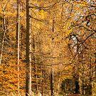 Autumn colours, riverside walk, November 2103  by Hugh McKean