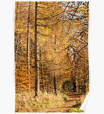Autumn colours, riverside walk, November 2103  Poster
