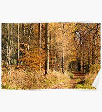 Autumn colors, riverside walk, November 2103  Poster