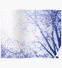 Flowering cherry tree - multiple exposure Poster