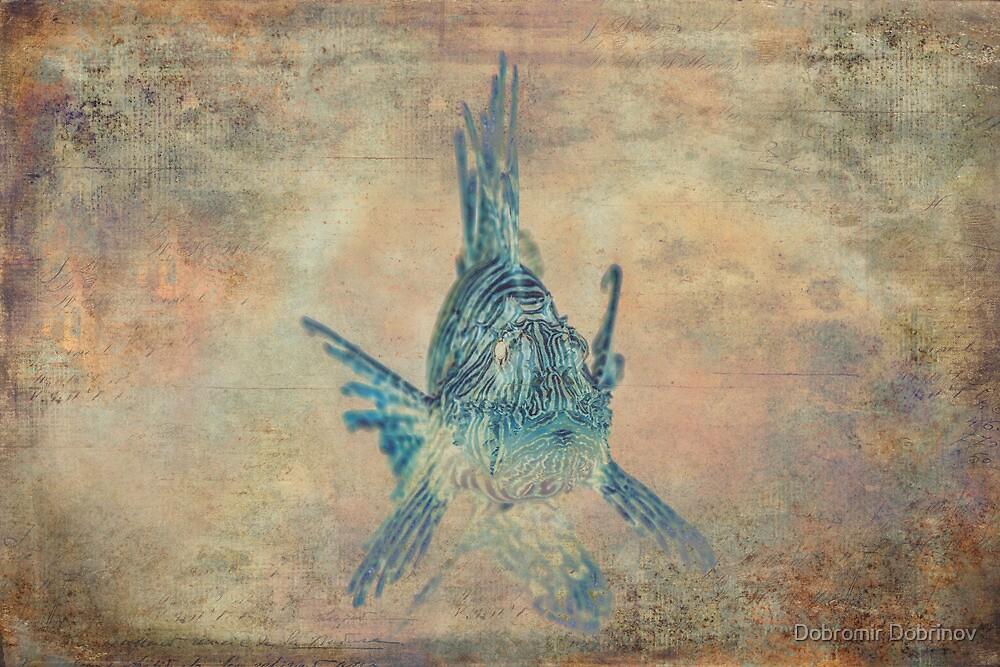 Fish by Dobromir Dobrinov