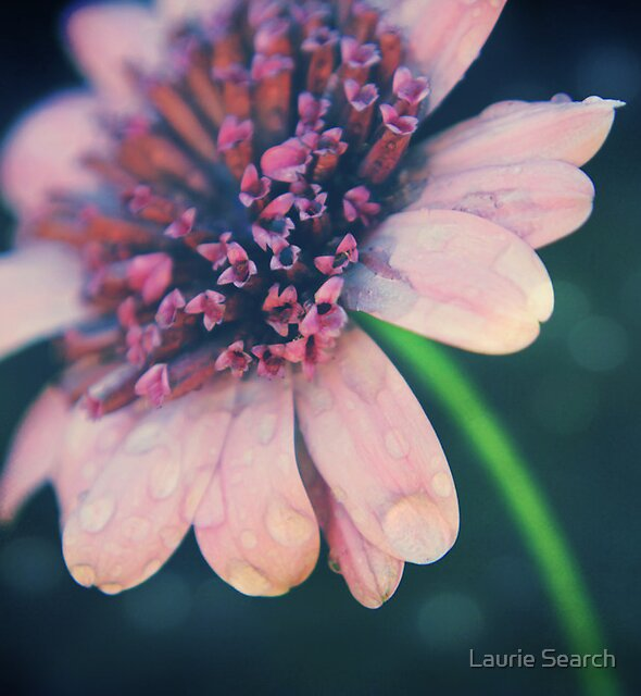 After the Rain by Laurie Search