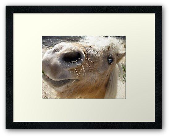 Miniature Shetland Pony by LittleCsDesigns