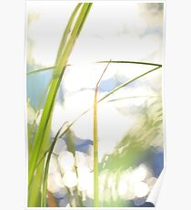 Grasses at the shore of a lake bathing in golden light Poster