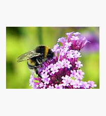 Gathering Nectar Photographic Print