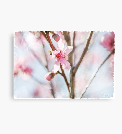 Blossom and Tulle Metal Print