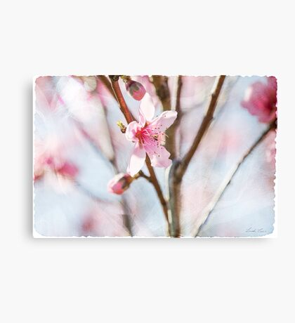 Blossom and Tulle Canvas Print