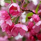 pink by telley20